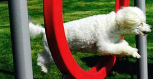 Dog Park Jump Equipment